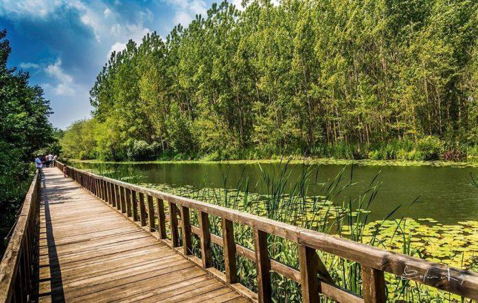 Acarlar Longozu Ormanı